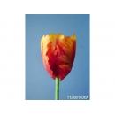 y11734 花藝設計-精緻人造花-小鸚鵡鬱金香 紅黃/枝 (共3色)