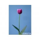 y11735 花藝設計-精緻人造花-小鬱金香 紫/枝 (共7色)