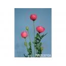 y11736 花藝設計-精緻人造花-山茶苞 桃紅 (共5色)