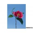 y11795 花藝設計-精緻人造花-野茶花 紅 /枝(共4色)