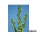 y11796 花藝設計-精緻人造花-雪梅 深綠(共3色)